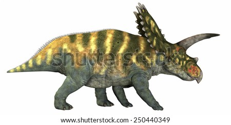Coahuilaceratops on White - Coahuilaceratops was a herbivore that lived in the Cretaceous Era of Mexico.