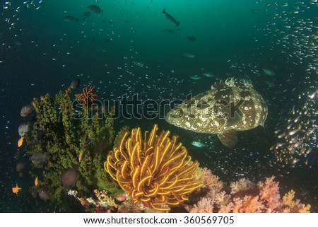 Coal reef grouper fish - stock photo