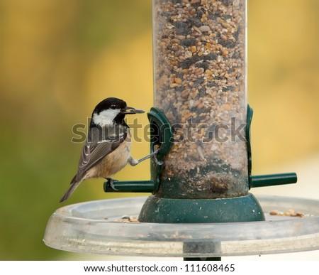 Coal Tit on a garden bird feeder - stock photo