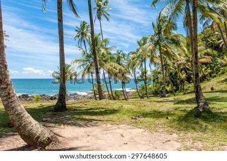 Coast of Bahia, Brazil - stock photo