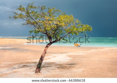 Coast of the Dead Sea with a standing alone tree in rainy weather out of a tourist season, Israel