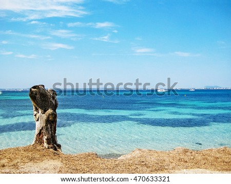 Coast with turquoise water of mediterranean sea on the island Majorca - stock of a tree at beach with dried seaweed in front