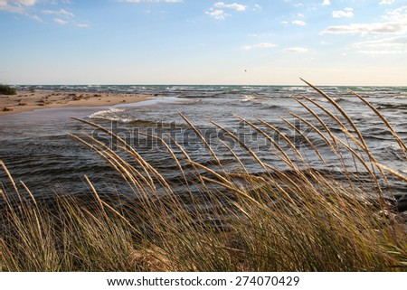 Coastal Background. Dune grass blows in the breeze as waves roll in on the sandy beach in the background. - stock photo