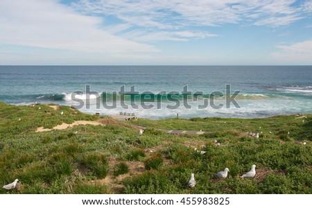 Coastal dunes, nesting sea gulls and Indian Ocean seascape at Penguin Island in Rockingham, Western Australia/Penguin Island: Dunes and Indian Ocean/Rockingham, Western Australia - stock photo