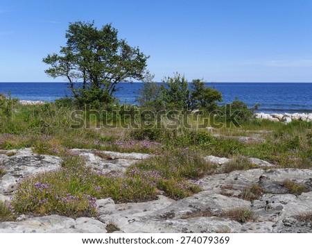 coastal landscape in sweden - stock photo