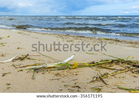 Coastal landscape with a dandelion and feather on foreground - stock photo