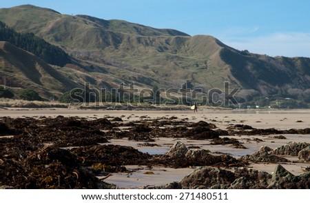 coastal New Zealand scene with seaweed on shore  - stock photo