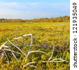Coastal prairie of Everglades National Park dominated by saltwort (Batis Maritima) - stock photo