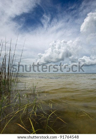 Coastal reeds and sea with afternoon storm clouds building - stock photo