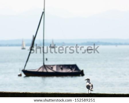 Coastal sea-gull with empty boat. Bavaria, Germany. - stock photo