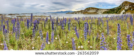 Coastline near Kaikoura, New Zealand - panoramic view - stock photo