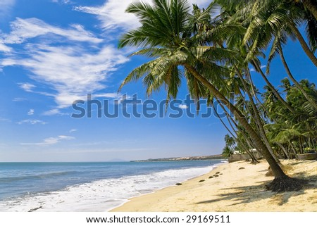 coastline of tropical sandy beach with group of palm coconut trees - stock photo
