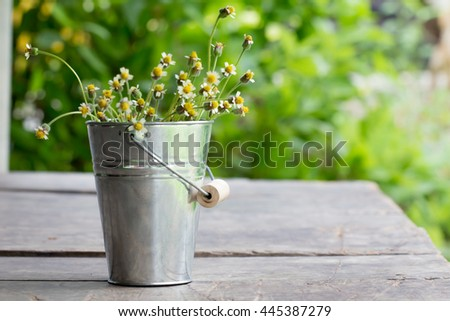 Coatbuttons, Mexican Daisy flowers in metal bucket on wooden table