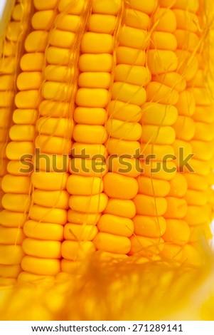 Cob of yellow sweet ripe raw corn.  - stock photo