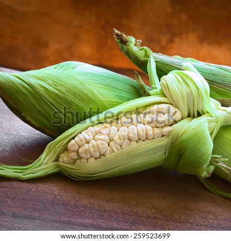Cobs of white corn called Choclo (Spanish), in English Peruvian or Cuzco corn, typically found in Peru and Bolivia, photographed with natural light (Selective Focus, Focus on the kernels)      - stock photo