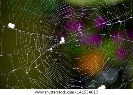 cobweb - stock photo