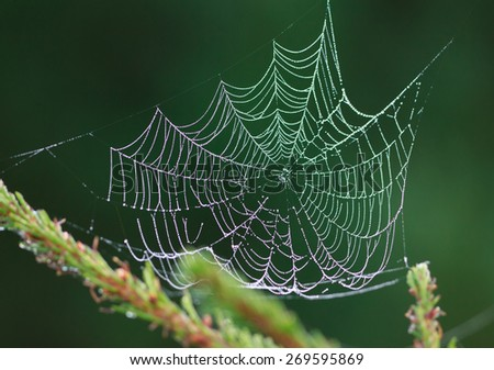 Cobweb at dawn with dew drops on dark green background, selective focus on some threads - stock photo