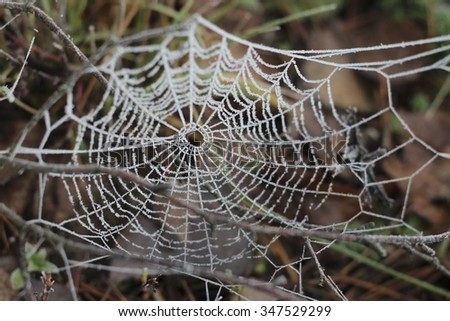 cobweb covered with frost - stock photo