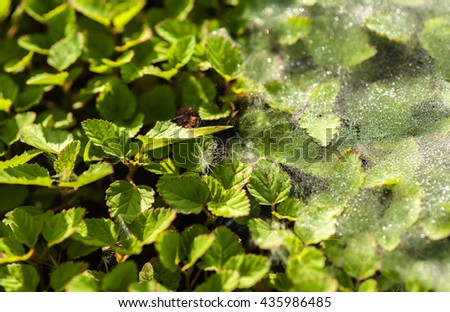 Cobweb dew on the morning grass.  - stock photo