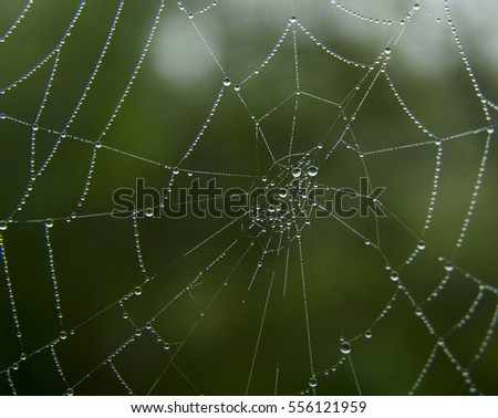 Cobweb in dew drops on the green background