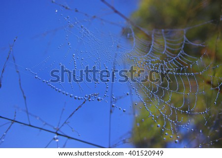 Cobweb in dew drops. Rain drops on a spiderweb.Blurred background.Process by photoshop. - stock photo