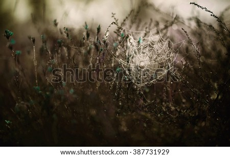 cobweb in grass with drops, abstract natural background, natural green background, creative photography, drops on the grass, spider webs on the grass - stock photo