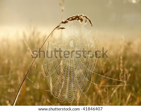 Cobweb in the light of the rising sun. Photo taken in October. - stock photo