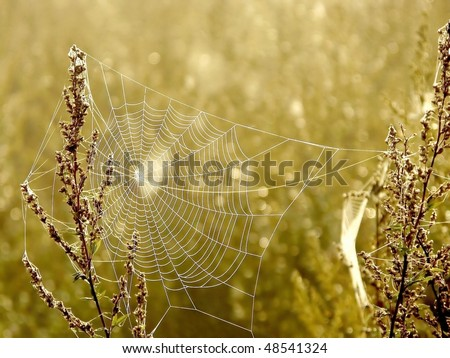 Cobweb on a meadow backlit by the light of the rising sun. - stock photo