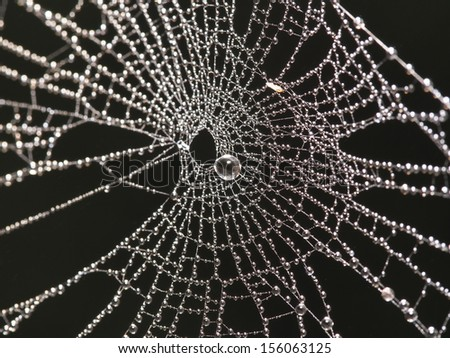 Cobweb with dew drops on nature background   - stock photo