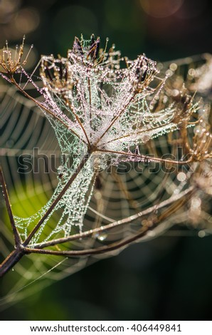 Cobweb with droplets of morning dew in the sun, close-up - stock photo