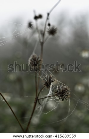 Cobweb with small dews during fog - stock photo