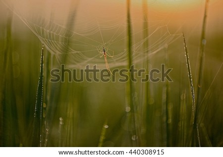 Cobweb with the morning dew.selective focus  - stock photo