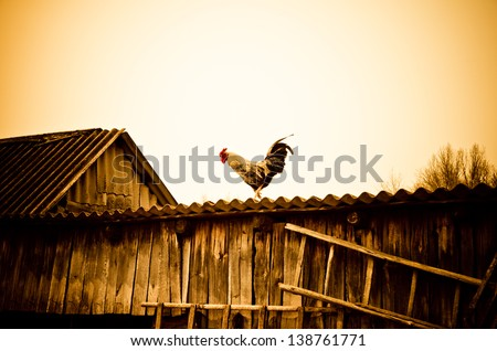cock on a rural roof - stock photo