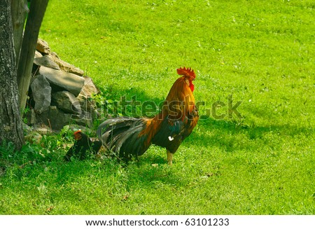 Cock with chicken in green grass - stock photo