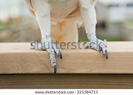 cockatoo feet