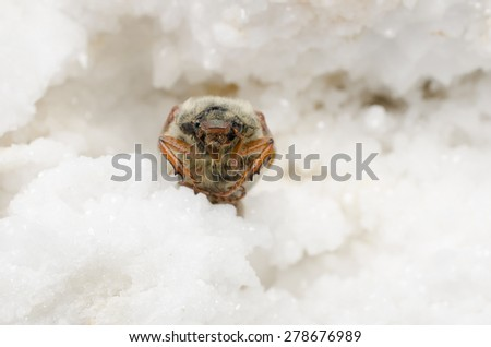 cockchafer lookout, minerals - stock photo