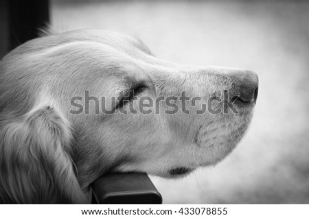 Cocker spaniel dog fast asleep - stock photo
