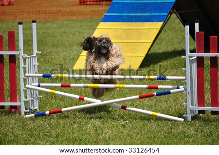 Cocker Spaniel leaping over a double jump at dog agility trial, copy space, vertical - stock photo