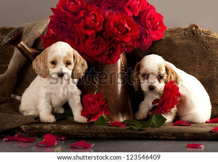 Cocker Spaniel puppies and flower red rose - stock photo