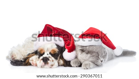 Cocker Spaniel puppy and tiny kitten sleeping in red santa hats. isolated on white background - stock photo
