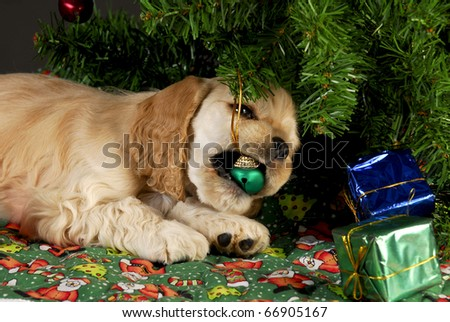 cocker spaniel puppy chewing on christmas ornaments under tree - stock photo
