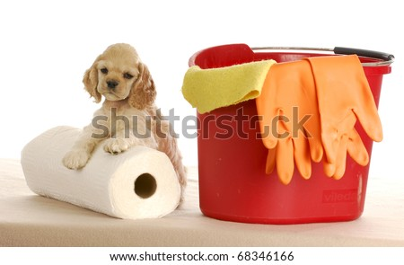 cocker spaniel puppy laying beside bucket and roll of paper towels on white background - stock photo