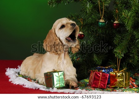 cocker spaniel puppy under christmas tree on green background - stock photo