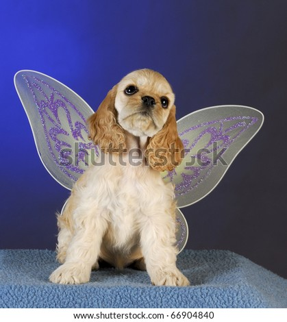 cocker spaniel puppy with angel wings on blue background - stock photo
