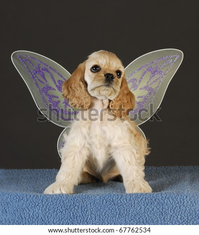 cocker spaniel puppy with angel wings sitting on blue blanket - stock photo