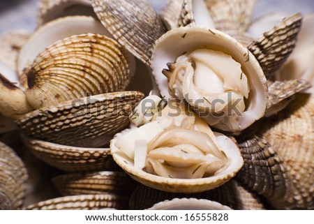 Cockles (Cerastoderma edule) dish with dill - stock photo