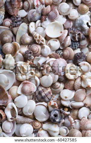 Cockleshell beach surface. Good use for background. - stock photo