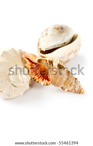 Cockleshells isolated on the white background - stock photo