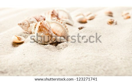 Cockleshells on sea sand isolated on a white background - stock photo