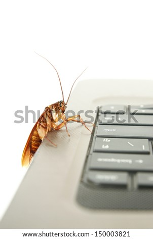 Cockroach climbing on keyboard to present about computer attacked from virus  - stock photo
